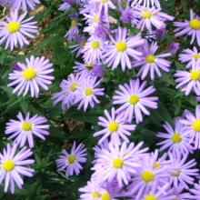 fleurs Mr bouarbouaron 3